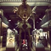 Musée d'histoire naturelle, Lille - France